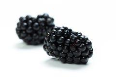 Blackberry  isolated Stock Image