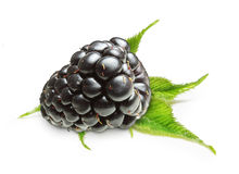 Blackberry Isolated Royalty Free Stock Image