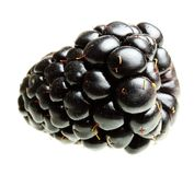 Blackberry Isolated Royalty Free Stock Images
