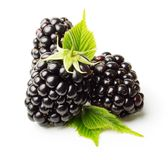 Blackberry isolated Stock Photos