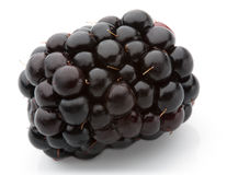 Blackberry isolated Royalty Free Stock Photography