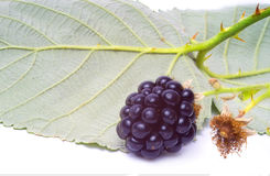 Blackberry with leaf. One blackberry with a leaf Royalty Free Stock Images