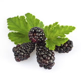Blackberry and leaf. On white stock photo