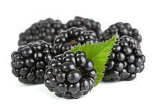 Blackberry with leaf Royalty Free Stock Image