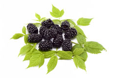 Blackberry and leaf Royalty Free Stock Photos