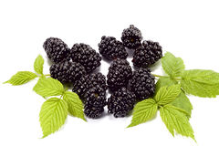 Blackberry and leaf Royalty Free Stock Images