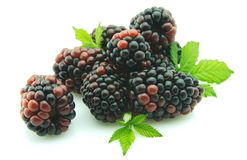 Blackberry with leaflets Royalty Free Stock Photography