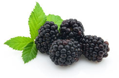 Blackberry with leaves. On a white background Stock Photos