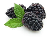 Blackberry with leaves Stock Images
