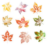 Blackberry leaves, painting Royalty Free Stock Photo