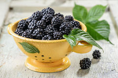 Blackberry with leaves and water drops Royalty Free Stock Image