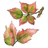 Blackberry leaves in a watercolor style isolated. Aquarelle leaf for background, texture, wrapper pattern, frame or border royalty free illustration