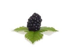 Blackberry met bladeren Royalty-vrije Stock Afbeelding