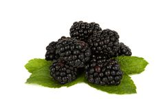 Blackberry and mint Stock Images