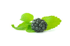 Blackberry  and mint leaves. Blackberries  and mint leaves Stock Images