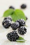 Blackberry mit Blättern Stockbilder