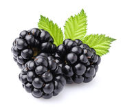 Blackberry mit Blättern Stockfotografie