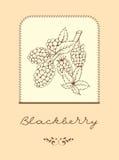 Blackberry mit Blättern Stockbild