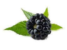 Blackberry mit grünen Blättern Lizenzfreie Stockfotos