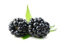 Blackberry mit grünen Blättern Lizenzfreies Stockfoto
