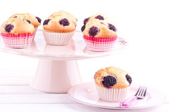 Blackberry muffins Stock Image
