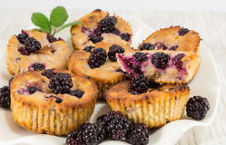 Blackberry-muffins op een plaat Stock Fotografie