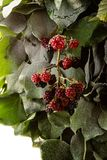 Blackberry New Year tree Stock Images