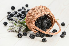 Blackberry in the pottle Stock Image