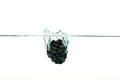 Blackberry que cai na água com um respingo Fotos de Stock Royalty Free