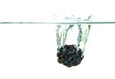 Blackberry que cai na água com um respingo Imagem de Stock