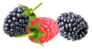 Blackberry and raspberries isolated on white. Background Royalty Free Stock Photography