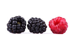 The blackberry and raspberry royalty free stock photography