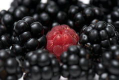 Blackberry and raspberry. Composition from a blackberry and raspberry on the white isolated background stock images