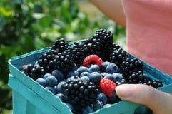 The blackberry, raspberry, blueberry berries. Close-up shot of blackberry, raspberry, blueberry berries in the bucket Stock Photos