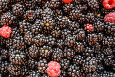 Blackberry and raspberry  fruit background Royalty Free Stock Photography