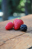 Blackberry, Raspberry and Strawberry. Freshly picked individual Blackberry, Raspberry and Strawberry place on rustic weathered wood Stock Photo