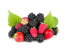 Blackberry, raspberry and strawberry Stock Photos