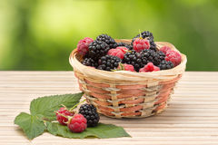Blackberry and raspberry in wicker basket on a background of foliage Stock Photos