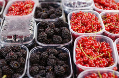 Blackberry and red currant in plastic containers Stock Photography