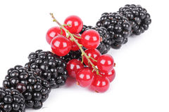 Blackberry and red currants Royalty Free Stock Photography