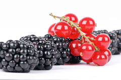 Blackberry and red currants Royalty Free Stock Photo