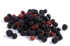 Blackberry and redberry Stock Image