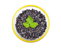 Blackberry (rubus) in glass bowl Stock Image