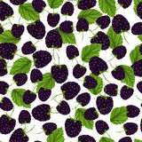 Blackberry seamless pattern Stock Photography