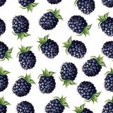 Blackberry seamless pattern Stock Photos