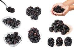 Blackberry set isolated Royalty Free Stock Photography