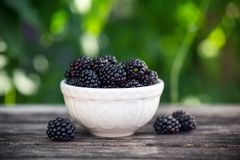 Blackberry in small bowl on wooden table in garden stock image