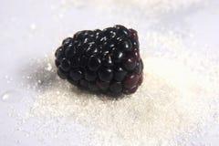 Blackberry in the sugar Stock Photos
