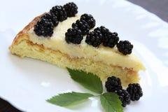 Blackberry tart Stock Images