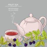 Blackberry tea vector background Stock Image